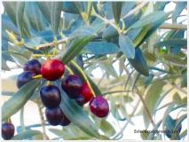 lush red berries