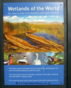 A huge variety of wildfowl