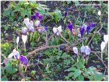A sprinkle of colour in Palewell Common