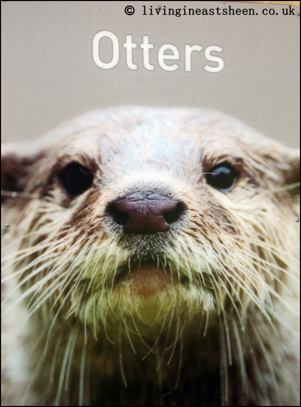East Asian Otters