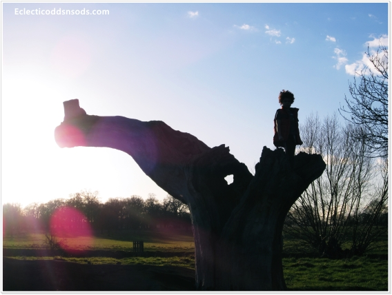 boy standing on a tree