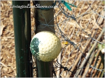 Golf balls of a life before children