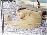 Sweet ferrets