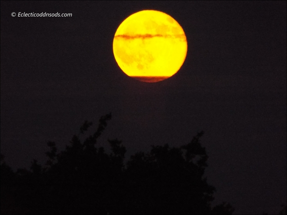 'Honey' Full moon on Friday 13th 2014 over Richmond Park