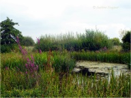 The beauty of the wetland area