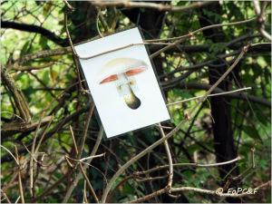 Mushroom Treasure Hunt