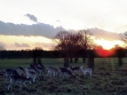 The Changing Seasons of Richmond Park