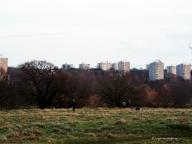 Urban horizons