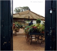 Petersham Nurseries Entrance