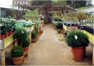 Petersham Nurseries Wild Food Walk With Claudio Bincoletto - Write Up