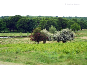 Changing Seasons May 2015 Richmond Park