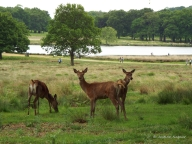 The Changing Seasons May 2015 Richmond Park