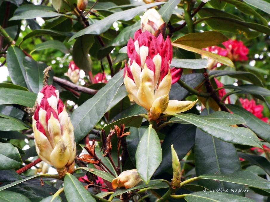 The Changing Seasons May 2015 Richmond Park